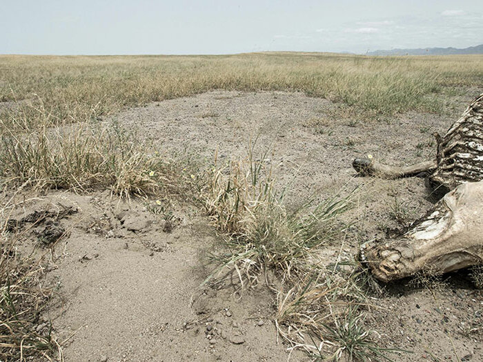 ruho aavikolla