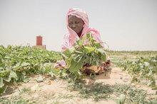 YK-järjestöt varoittavat Keski-Sahelin tilanteesta, jossa miljoonat kärsivät nälästä nopeasti kiihtyvän humanitaarisen kriisin keskellä
